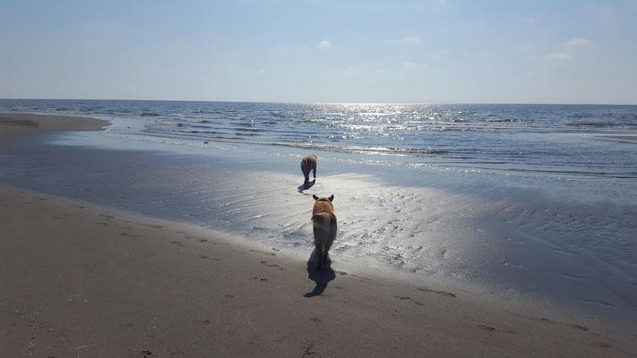 und einen langen Spaziergang am Meer wenn es noch kühl ist..