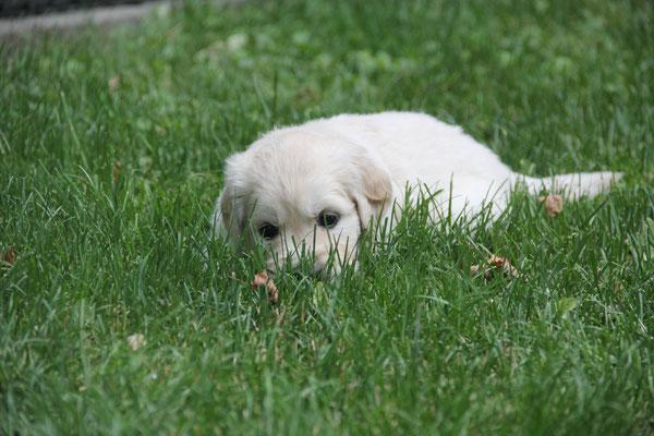 im Gras liegen...
