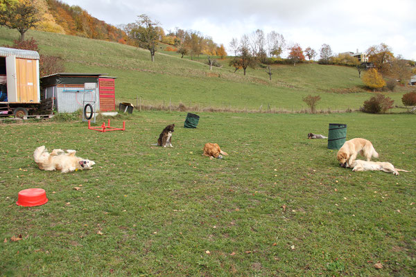 6 unserer 8 Hunde zusammen auf einem Bild!