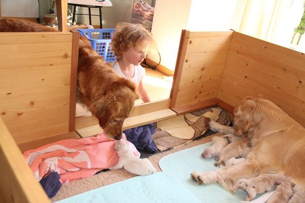 Hailey ist ganz entzückt von den Kleinen. Gottemeitli Janina ist auch ganz fasziniert.