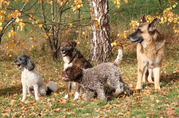 Brigittes Hunde: Rocky, Beauty( gehört eigentlich Daniela, ihrer Tochter), Nuria und Daisy