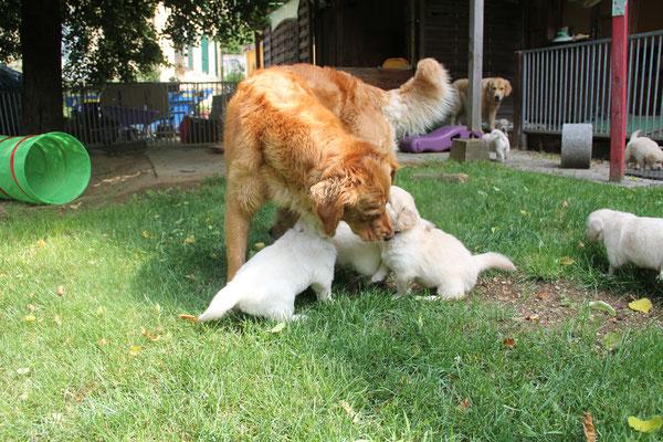 Hailey betreut die Kleinen liebevoll