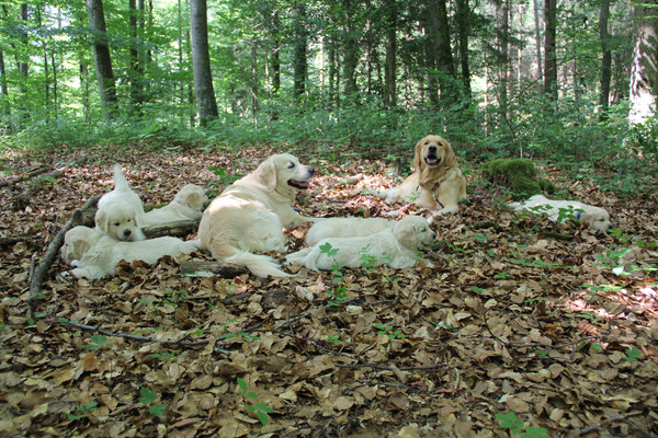 Und plötzlich sind alle müde und schlafen ein. Die Grossen passen auf während die Welpen schlafen.