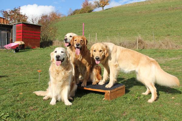 Meine vier: Nita, Luna, Hailey und Easy