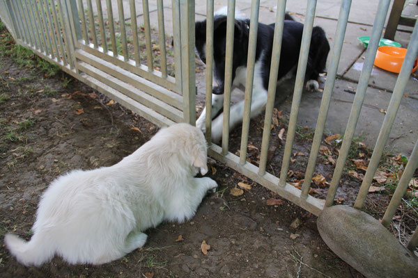 dann hatten wir Besuch von Joey und Nero, zwei ganz lieben Hunden.