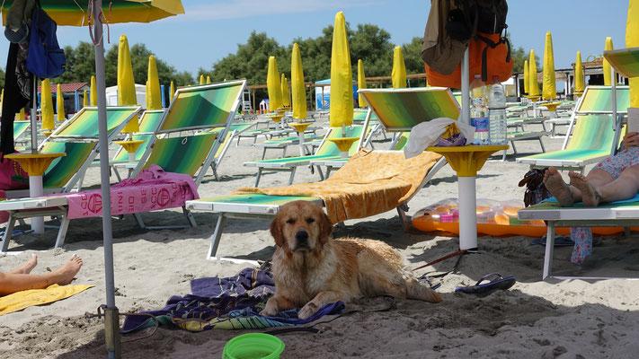 am Strand im Schatten...