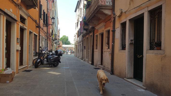 ich geniesse die Strassen von klein Venedig...