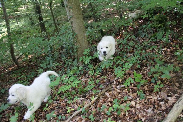 Erkundungen im Wald