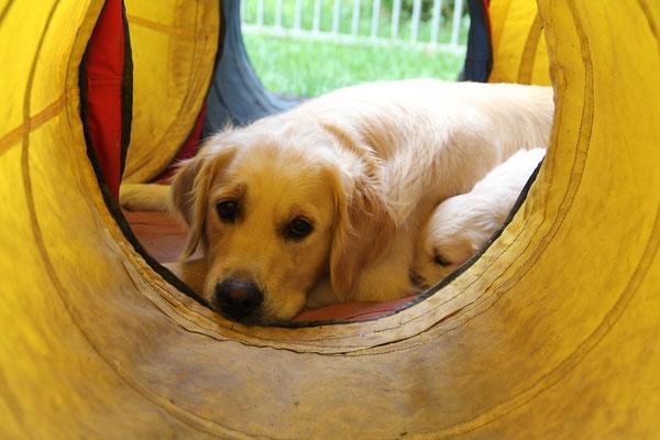 Luna liebt Abwechslung... säugen im Mehrfachtunnel...