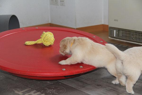 diesen Ball will ich...