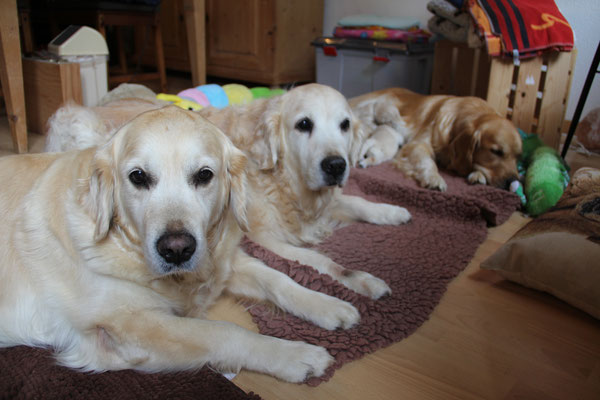 3 Generationen of Mapiya, ich bin so stolz auf diese tollen Hunde.