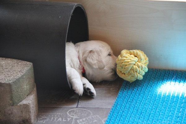 und manchmal, schläft man beim spielen ein...