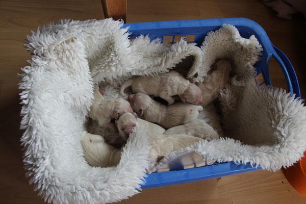 während dessen Luna draussen ist liegen die Kleinen kuschelig warm zusammen