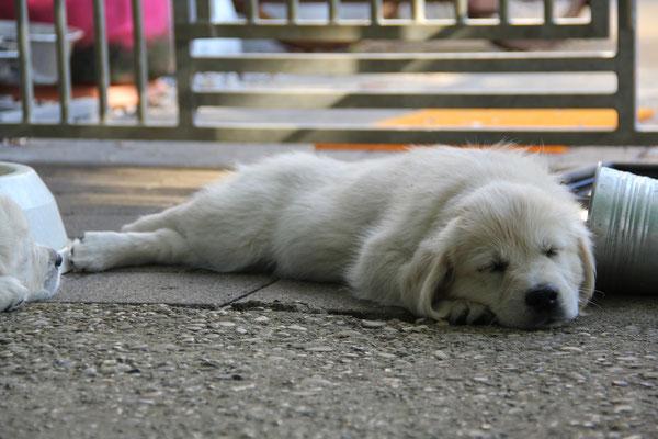 der wohlverdiente Schlaf...