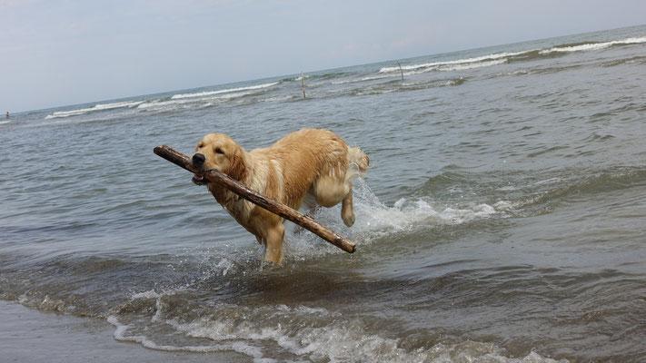 zum Meer.....