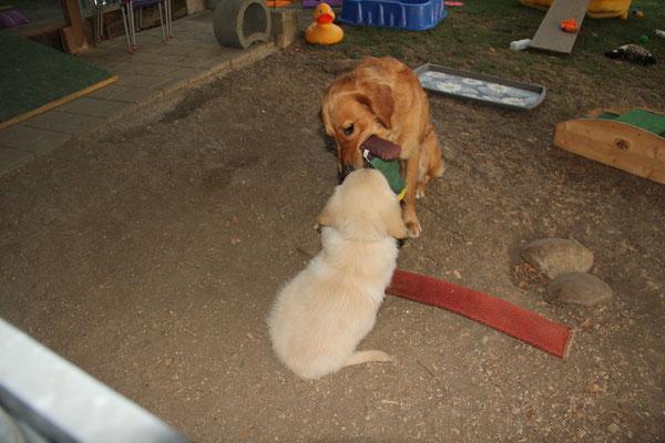 mit Hailey um das Spielzeug kämpfen...