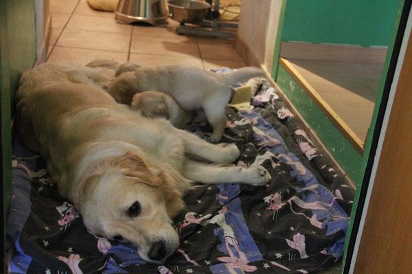 gemütlich auf dem Hundebett