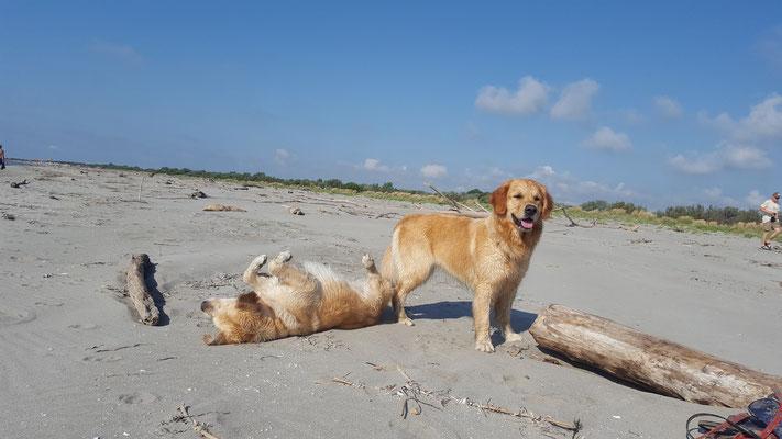 den Strand....
