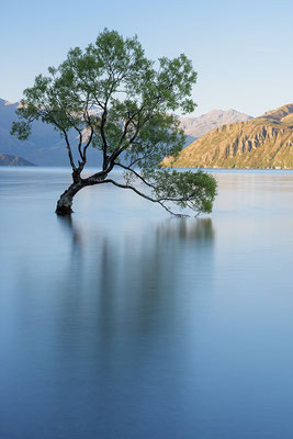 Baum am Lake Wanaka