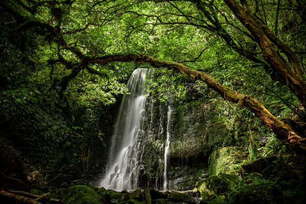 Wasserfall in den Catlins