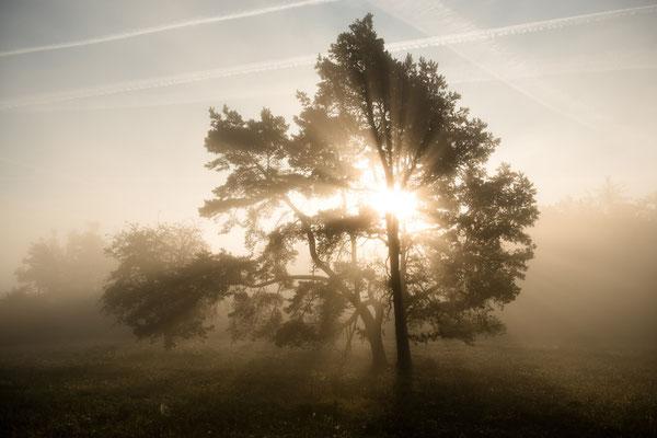 Herbst im Nationalpark Kellerwald bei Bringhausen (Hessen)