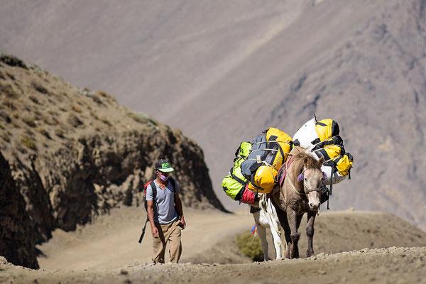 Maultiere mit Trekkingausrüstung bei Kagbeni