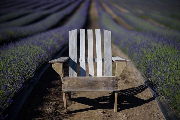 Lavendelfeld am Lake Pukkaki