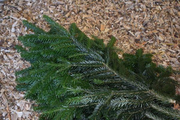 Dekorationsäste - Tannenbaumplantage Wälchli Weihnachtsbäume Wäckerschwend