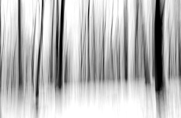 forestal dna