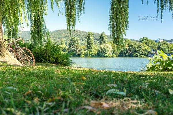 232|365 19.07.2016 - Sommer an der Neckarwiese