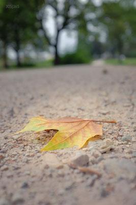 305|365 30.09.2016 - Herbst