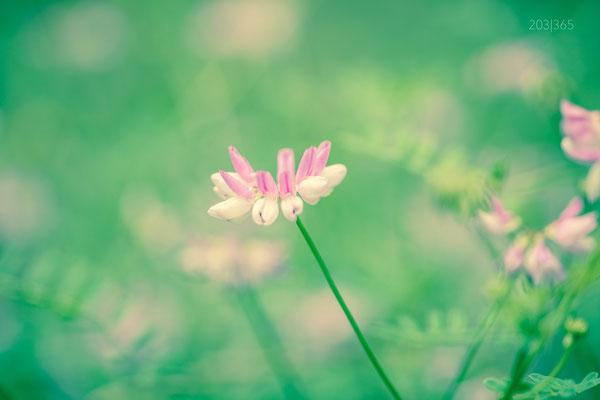 203|365 20.06.2016 - Blumen auf Augenhöhe