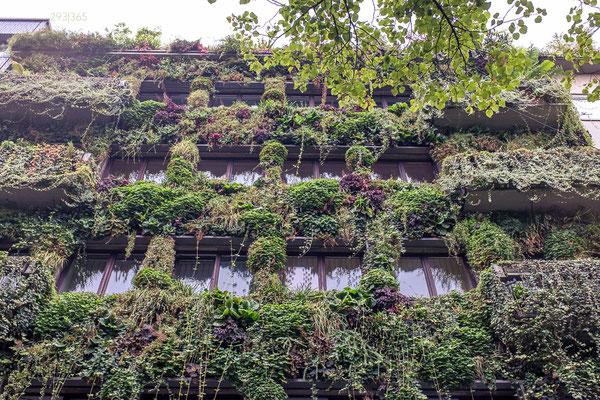 293|365 18.09.2016 - Ultra Fassadenbegrünung