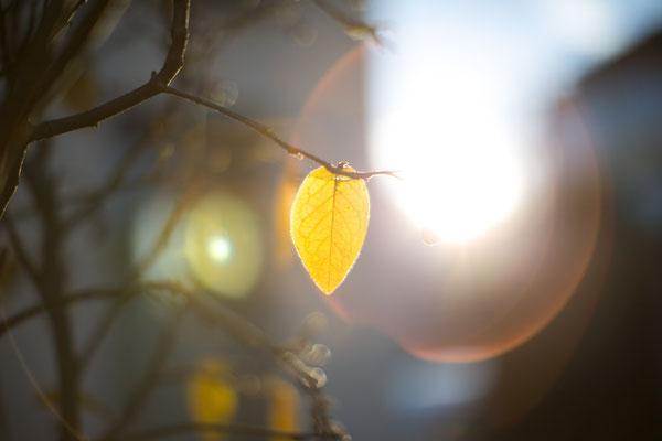07/365 - 07.12.2015 - last leaf