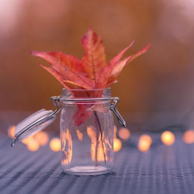 347|365 11.11.2016 - Herbstglas