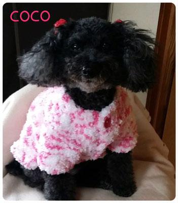 COCOちゃん