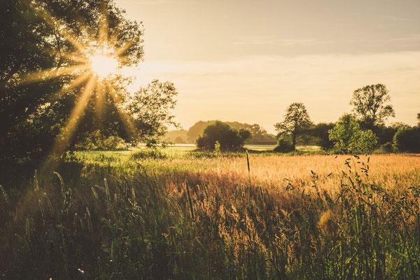 Sonnenuntergang in der Lindhorster Heide