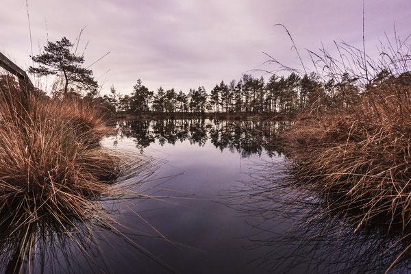 Stehendes Gewässer im Pietzmoor bei Schneverdingen - Lüneburger Heide