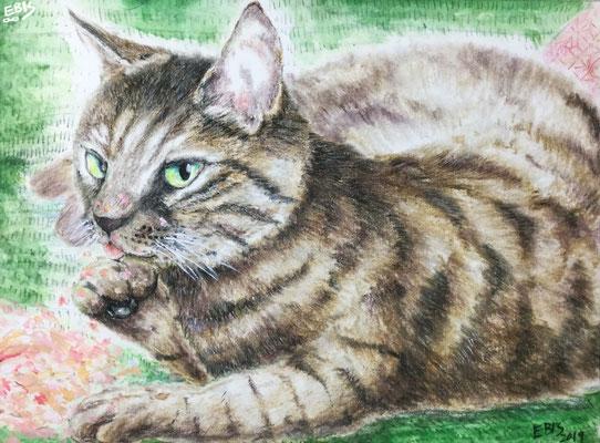 色鉛筆画4
