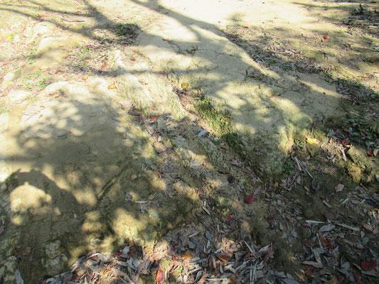地層:砂泥互層。地質は、梶原山も八幡山も同じ。