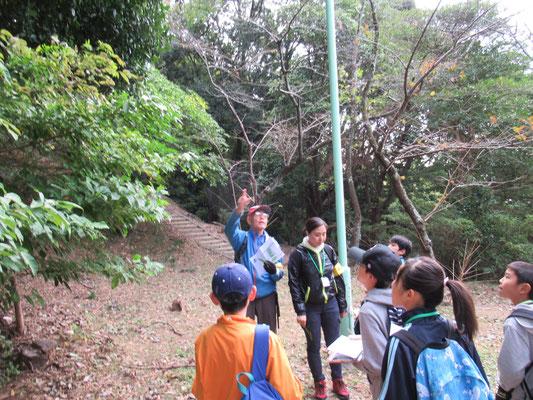 タラヨウ:常緑高木で、葉は厚く光沢がある。葉の裏側を棒などでひっかくと黒く変色して文字を書くことができる。葉書の語源になったとも言われる。
