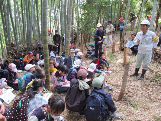 竹の子畑:竹の根はどのようになっているか。