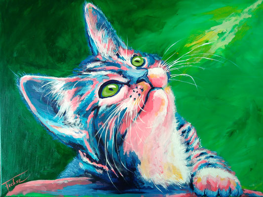 NEUGIERIGER KATER   | Acrylic  on Canvas 80x60 cm |