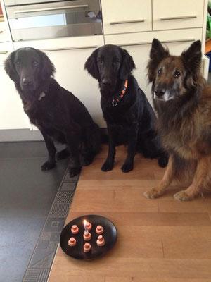 Souky und ihre Hundefamilie - leider musste sie ihre Geburtstagtorte teilen