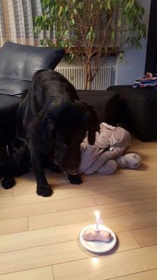 Pisco mit seinem geliebten Elefant