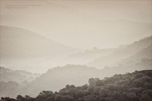 Niveles de niebla