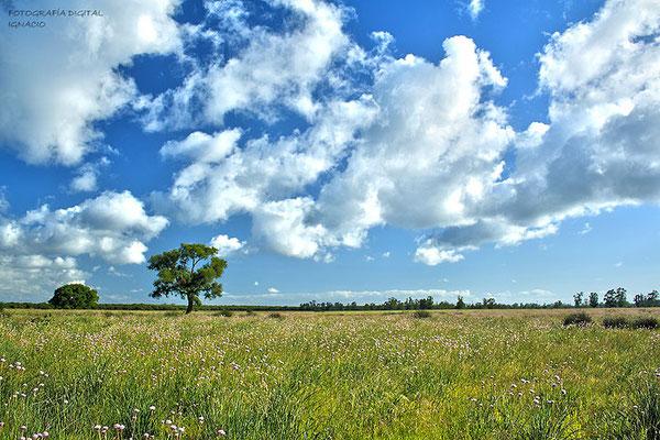 Coto del Rey (Doñana), esta foto es un HDR suave.