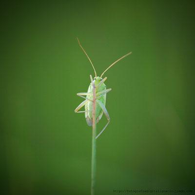 Un bichito verde en su entorno, Fotografía realizada con el 100 Macro de Canon