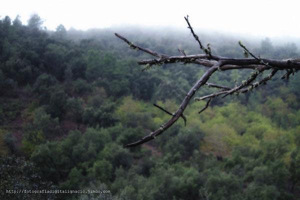 Una rama, solitaria