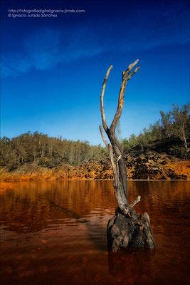 Arbol en el río (Esta foto se la dedico a Jesús)